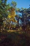 Лес в осени sunlit солнечным светом Стоковые Изображения RF