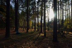 Лес в осени sunlit Стоковые Изображения RF