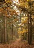 Лес в осени, Veluwe, Голландия Стоковое Изображение