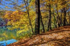 Лес вдоль озера в осени, изображения HDR Стоковое Изображение