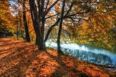Лес вдоль озера в осени, изображения HDR Стоковое Изображение RF