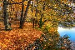 Лес вдоль озера в осени, изображения HDR Стоковые Изображения