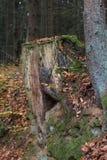 Лес в падении Стоковое Изображение