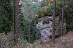 Лес в падении Стоковые Изображения RF