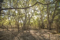 Лес в парке общины Мадриде Стоковые Изображения RF