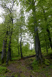Лес в парке Polyanitsky Стоковая Фотография RF