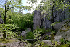 Лес в парке Polyanitsky Стоковое фото RF