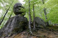 Лес в парке Polyanitsky Стоковые Фотографии RF