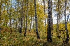 Лес в падении стоковая фотография