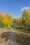 Лес в падении стоковое фото rf