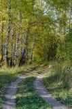 Лес в падении стоковое изображение rf