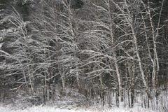 Лес в последней осени стоковые фотографии rf