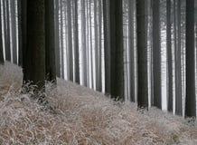 Лес в предыдущей зиме Стоковые Изображения RF