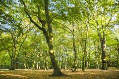 Лес в сверкная солнечном дне стоковое изображение