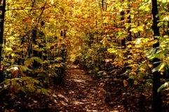 Лес в свете на утре осени Стоковые Изображения