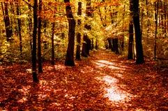 Лес в свете на утре осени Стоковое фото RF