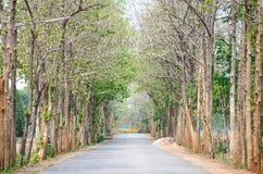 Лес в сезоне лета, Таиланд дороги Стоковые Изображения RF