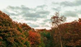Лес в сезоне осени стоковые фотографии rf