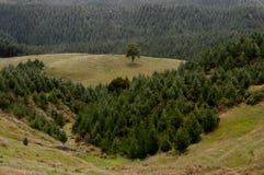 Лес в сельской местности Стоковые Фото