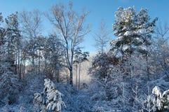 Лес в снеге. Стоковое Изображение RF