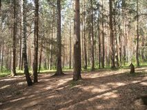 Лес в солнечном дне стоковые фото
