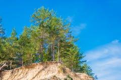 Лес в солнечном дне Стоковая Фотография RF