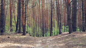 Лес в солнечном дне Стоковое фото RF