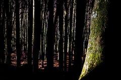 Лес в Словакии Стоковое Фото
