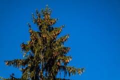 Лес в Словакии Стоковые Изображения RF