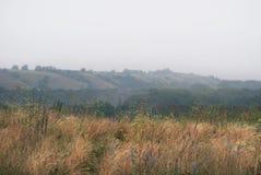 Лес в туманной долине Стоковая Фотография