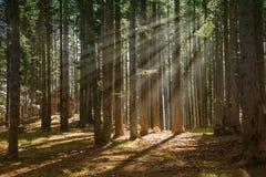 Лес в туманном утре стоковая фотография rf