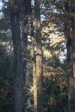 Лес в утре и солнечном дне стоковое фото