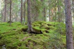 Лес в Финляндии на лете стоковое фото