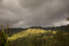 Лес в центральных андийских горах Колумбии стоковое изображение rf