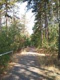 Лес в чехии стоковое изображение
