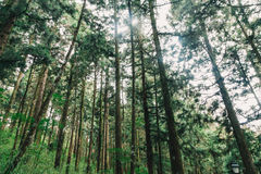 Лес в Alishan Тайване, taichung Стоковое Изображение