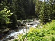 Лес в districkt lac Balea Стоковые Фотографии RF