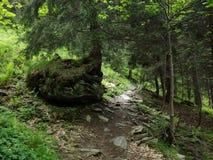 Лес в districkt lac Balea Стоковое фото RF