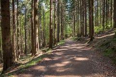 Лес в Harz Германии Стоковое фото RF