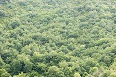 Лес в Irati Стоковая Фотография RF