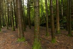 Лес в Irati Стоковое фото RF