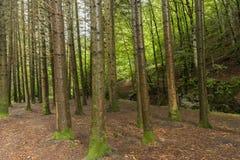 Лес в Irati Стоковые Изображения