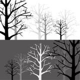 Лес в 2 Monotone Стоковые Фото