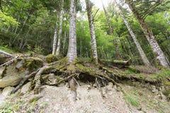 Лес в Seva de Irati Стоковые Изображения