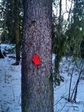 Лес в wintertime стоковое фото rf