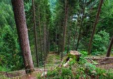 Лес Германия Schwarzwald черный Стоковые Изображения RF