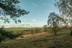 Лес гоньбы Cannock в осени стоковая фотография