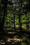 Лес города Yalova - Турции Стоковые Фотографии RF