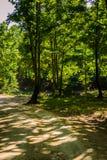 Лес города Yalova - Турции Стоковое Изображение RF