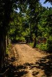 Лес города Yalova - Турции Стоковое Фото